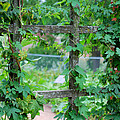 Wooden Trellis And Vines by Nancy Mueller