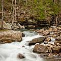 Woodland Creek by Marion Wear