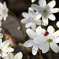 Woodland Flora And Friend by Bill Pevlor