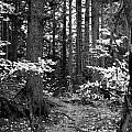 Woodland by Kathleen Grace