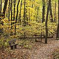 Woodland Respite by Bernard Lynch
