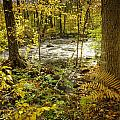 Woodland Scene by Fran Gallogly