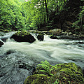 Woodland Stream And Rapids, Time by Norbert Rosing