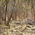 Woodland by Svetlana Sewell
