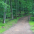 Woodland Trail by John Zawacki