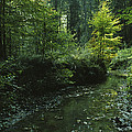 Woodland View With Stream by Klaus Nigge