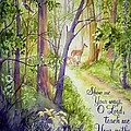Woodland Walk by Gail Vass