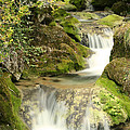 Woodland Waterfall by Victoria Hillman