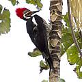 Woodpecker 1 by Heiko Koehrer-Wagner