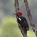 Woodpecker 4 by Heiko Koehrer-Wagner