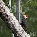 Woodpecker Sizes Me Up by Darcy Michaelchuk