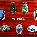Woodpeckers by Barbara Bowen