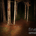 Woods At Night by Ted Kinsman
