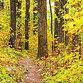 Woods by George Ramondo