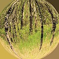 Woods In Crystal Ball by Roland Stanke