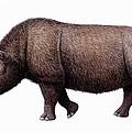 Woolly Rhinoceros, Artwork by Mauricio Anton