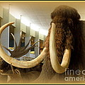 Wooly Mammoth by Lainie Wrightson