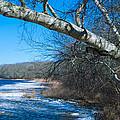 Wordens Pond Winter by Steven Natanson
