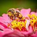 Worker Bee by Keith Allen