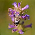 Worker Bee by Mitch Shindelbower