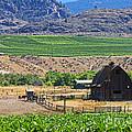 Working Farm by Nancy Harrison