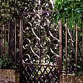 Wrought Iron by Jean Haynes