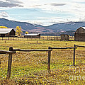 Wyoing Barns by Carolyn Fox