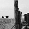 Wyoming Fence Line by David Bearden