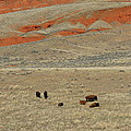 Wyoming Red Cliffs And Buffalo by Carol Groenen