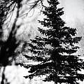 X-mas Tree by Simone Hester