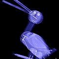 X-ray Of A Wooden Duck Toy by Ted Kinsman