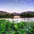 Xianghu - Lotus (xiaoshan) by Andy Brandl