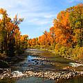 Yampa River by Dana Kern