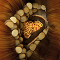 Yellow And Orange Anemone Mouth, Sabah by Mathieu Meur