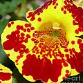 Yellow And Red Bright Flower by Terri Thompson