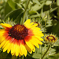 Yellow And Red In The Sunshine by Mick Anderson