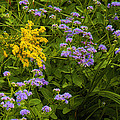 Yellow And Violet Flowers by Roena King