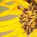 Yellow Beauty by Jean A Chang