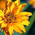 Yellow Beauty by Rourke