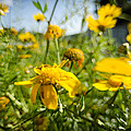 Yellow Blooming Wildflowers by Michael Goyberg