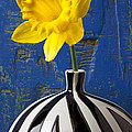 Yellow Daffodil In Striped Vase by Garry Gay