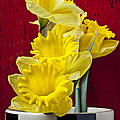 Yellow Daffodils In Checkered Vase by Garry Gay