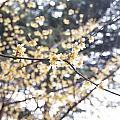 Yellow Flower 3 by Corey Landers