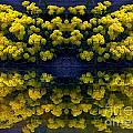 Yellow Flowers by Dale   Ford