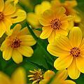 Yellow Flowers by Marty Koch