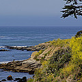 Yellow Flowers On The Central California Coast by Mick Anderson