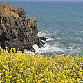 Yellow Flowers On The Northern California Coast by Mick Anderson