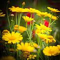 Yellow by Gabriela Insuratelu