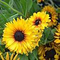Yellow Garden by Bonnie Myszka