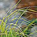 Yellow Grass by Debbie Sikes
